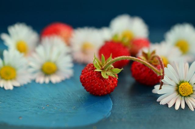 jahody u sedmikrásek