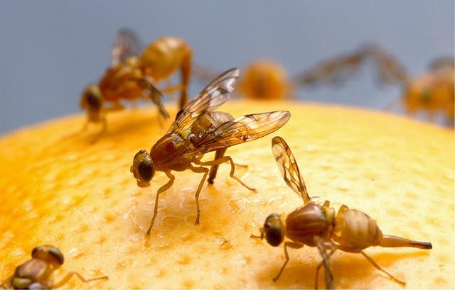 Rozlučte se s nechtěným hmyzem jednou provždy